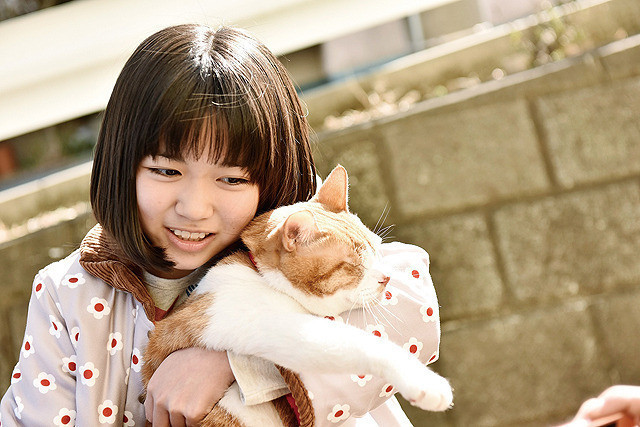 トラさん~僕が猫になったワケ~