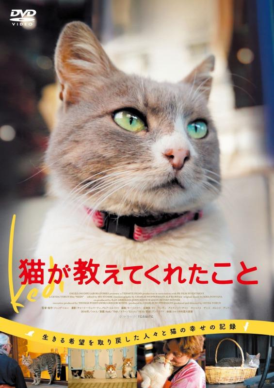 猫が教えてくれたこと